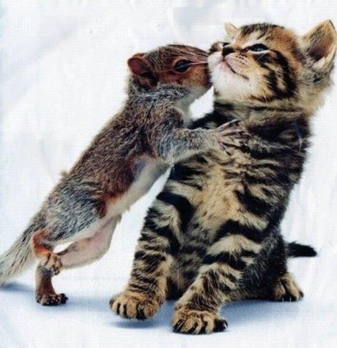foto foto binatang lucu